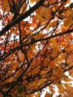 Signs of a changing season